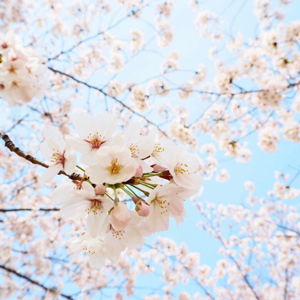 春のお出かけ日記と制作状況
